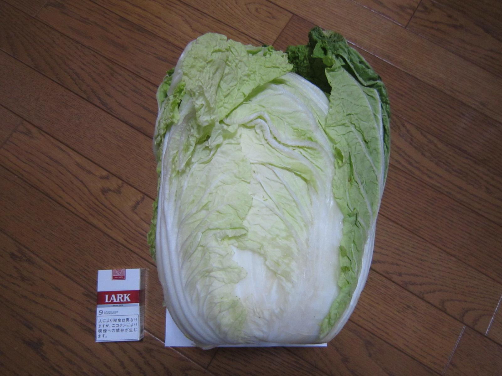 白菜_f0204295_16383578.jpg