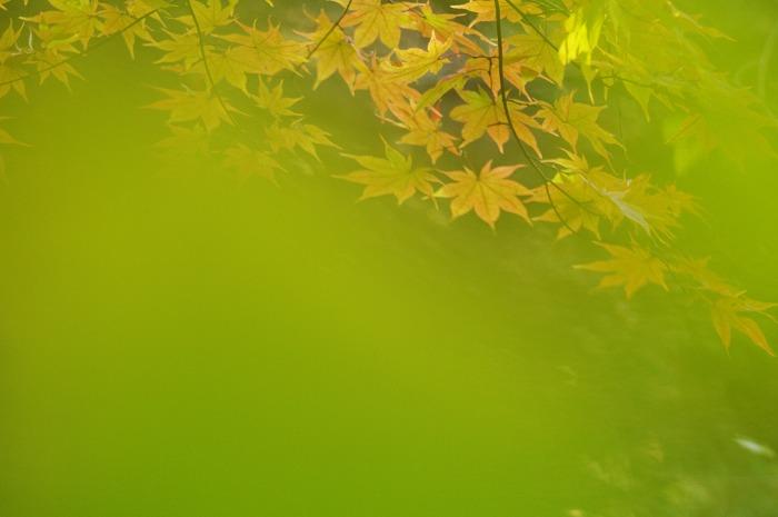 黄色い誘惑_b0103798_4581884.jpg