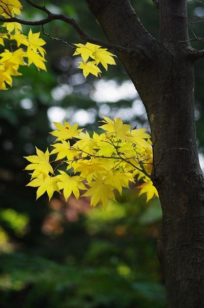 黄色い誘惑_b0103798_4583448.jpg