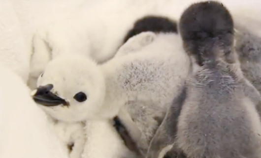 NYのセントラルパーク動物園が可愛いブログはじめました_b0007805_853056.jpg