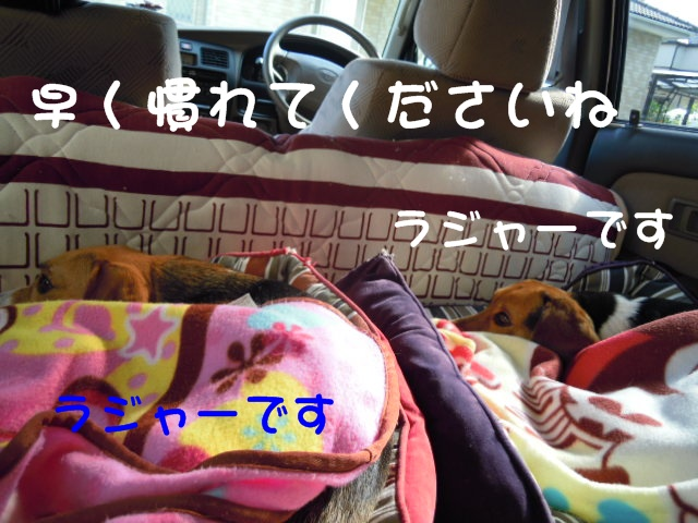 c0166622_15125635.jpg