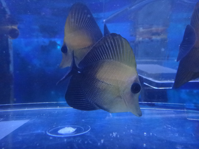 海水魚・サンゴ・水草・淡水魚_f0189122_1334492.jpg