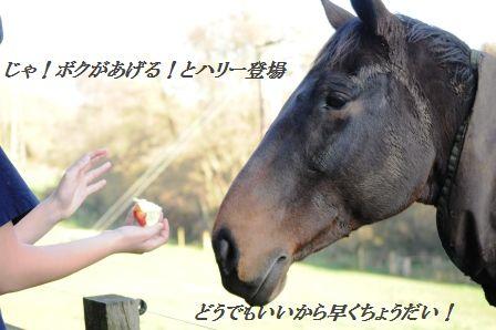 作り置きおかず☆もやしのピリ辛桜エビオイル和え_d0104926_3201866.jpg