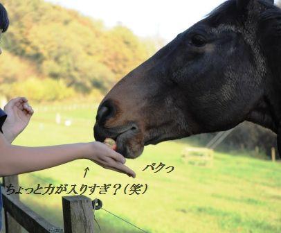 作り置きおかず☆もやしのピリ辛桜エビオイル和え_d0104926_3203177.jpg