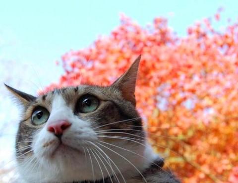 おにゃんぽ猫 ぽー編。_a0143140_23355898.jpg