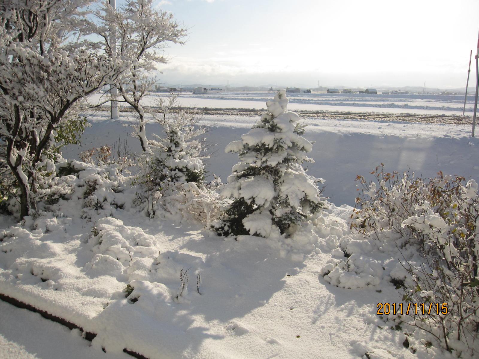 *初雪*_f0231042_18294466.jpg