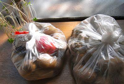 ネギの収穫開始_c0063348_21194968.jpg