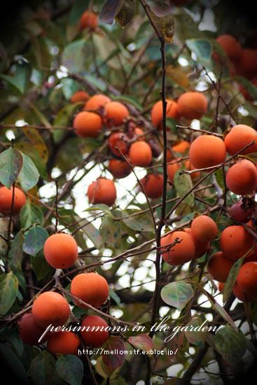 秋の鳥かごアレンジ。_d0124248_21205498.jpg
