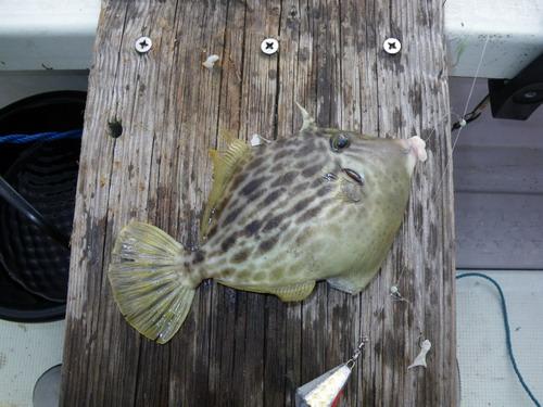 カワハギ釣りが5目釣りに、水温が高すぎる。_f0175450_114727100.jpg