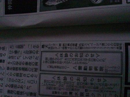 シーズー犬の情報_b0106766_17184316.jpg