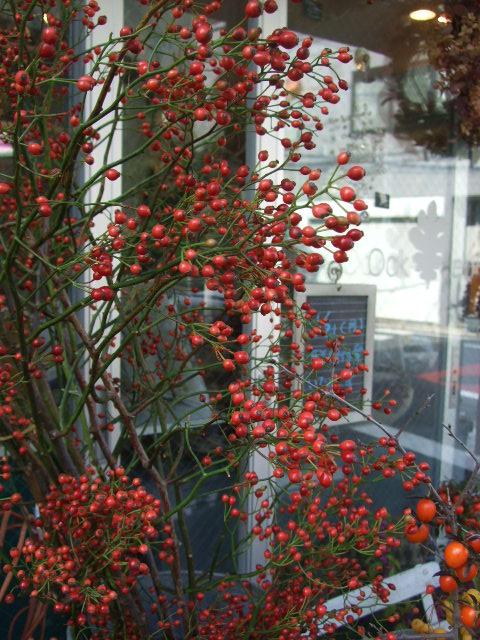 オークリーフ(ヤドリギそしてモミの木)_f0049672_1744449.jpg