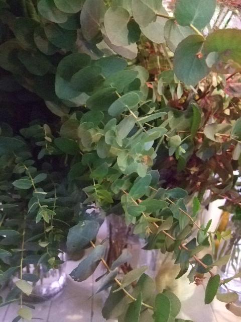 オークリーフ(ヤドリギそしてモミの木)_f0049672_17451563.jpg