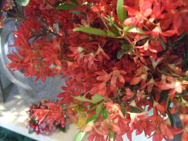 オークリーフ(ヤドリギそしてモミの木)_f0049672_17465971.jpg