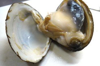 姥貝/ウバガイ ホッキ貝 : 魚食の日々
