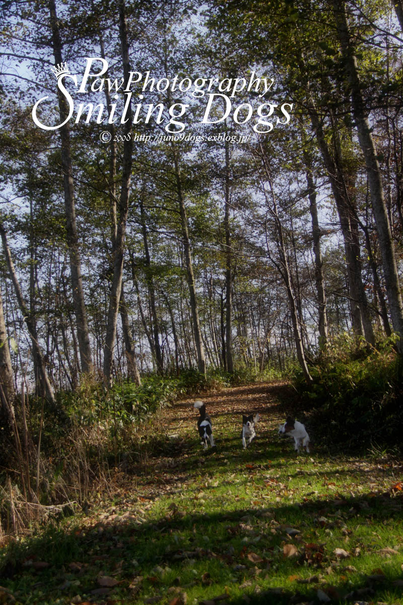 林のサンポ_f0116805_1413750.jpg