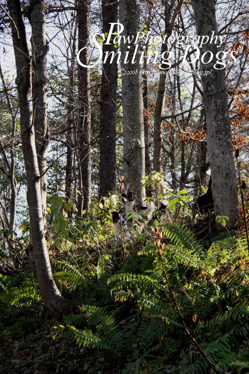 林のサンポ_f0116805_142428.jpg