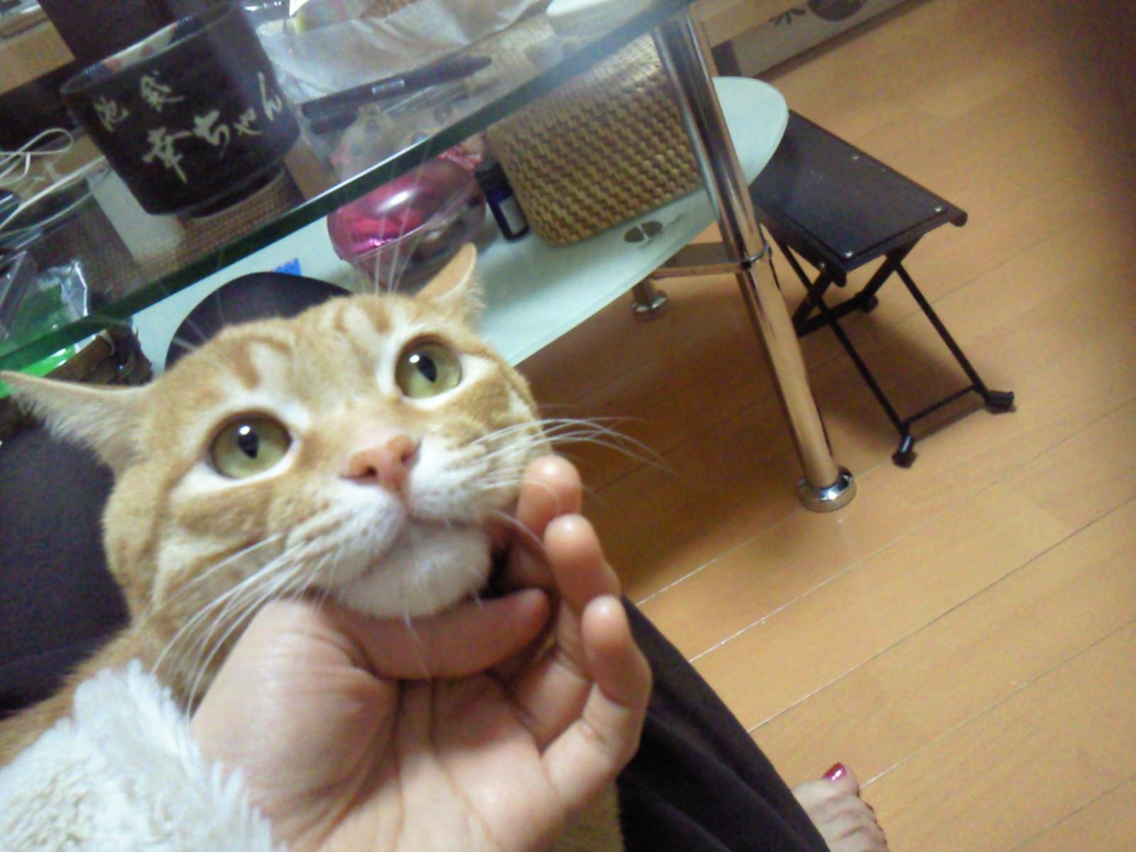 ホットペッパーありがとうございました。今日はアジアカフェです。_f0178313_1454275.jpg