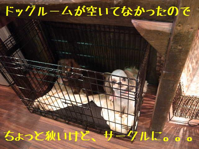 b0130018_17483230.jpg