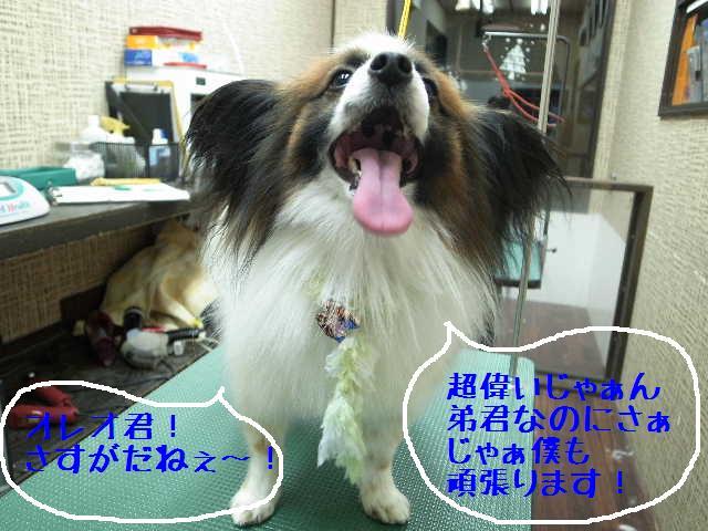 b0130018_17515181.jpg
