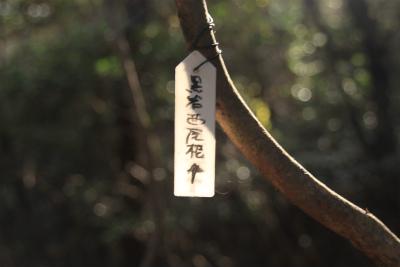 六甲山ロックガーデン・東おたふく山から黒岩西尾根を登る_d0055236_22481237.jpg
