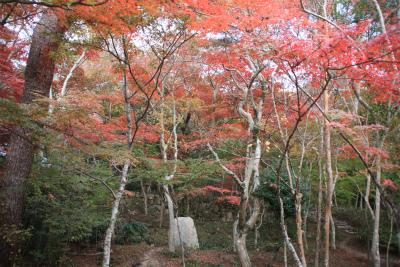 六甲山ロックガーデン・東おたふく山から黒岩西尾根を登る_d0055236_2320325.jpg