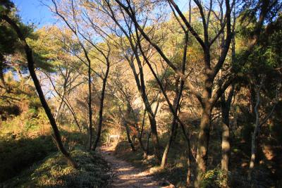 六甲山ロックガーデン・東おたふく山から黒岩西尾根を登る_d0055236_232133100.jpg