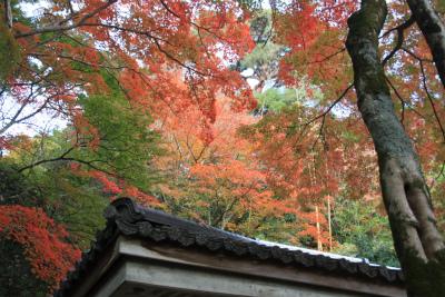 六甲山ロックガーデン・東おたふく山から黒岩西尾根を登る_d0055236_2321584.jpg