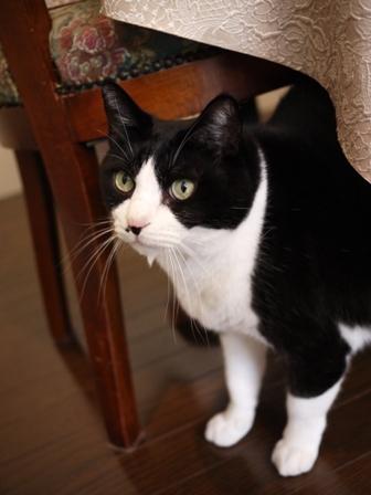 猫のお友だち ハナくん編。_a0143140_23514972.jpg