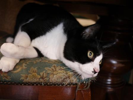 猫のお友だち ハナくん編。_a0143140_23523367.jpg