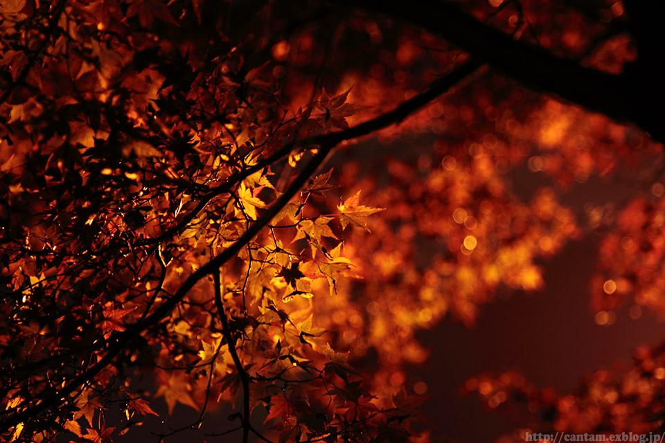 宇甘渓の紅葉ライトアップ_f0091955_22435786.jpg
