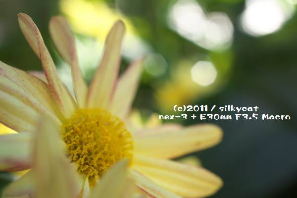 c0026757_835630.jpg