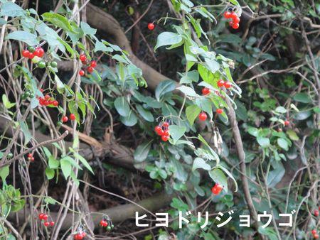H23年11月度植物調査_c0108460_1652507.jpg