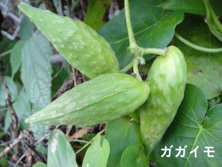 H23年11月度植物調査_c0108460_1654548.jpg