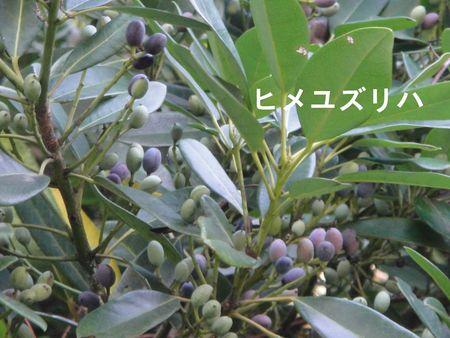 H23年11月度植物調査_c0108460_16554999.jpg
