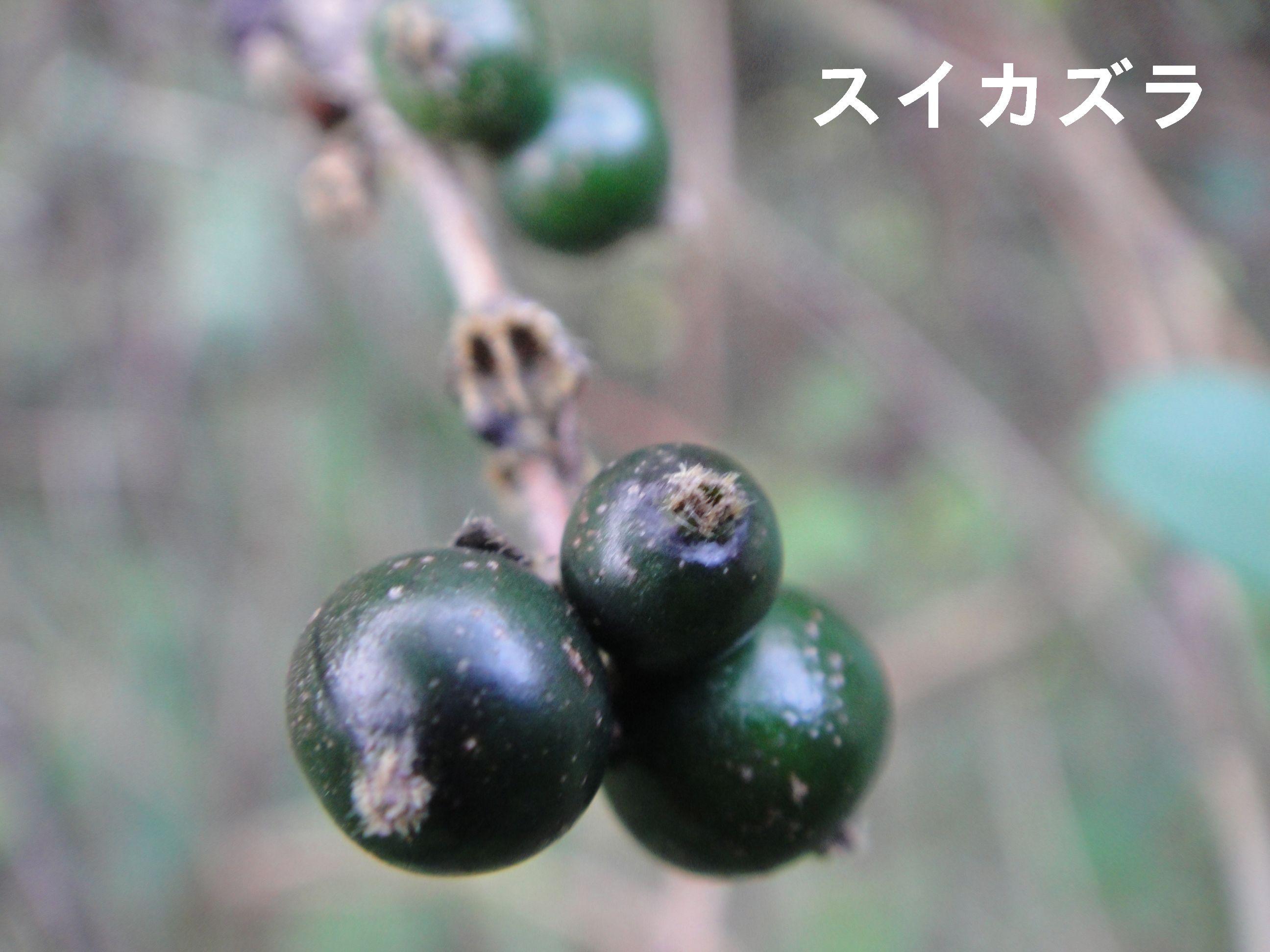 H23年11月度植物調査_c0108460_16563927.jpg