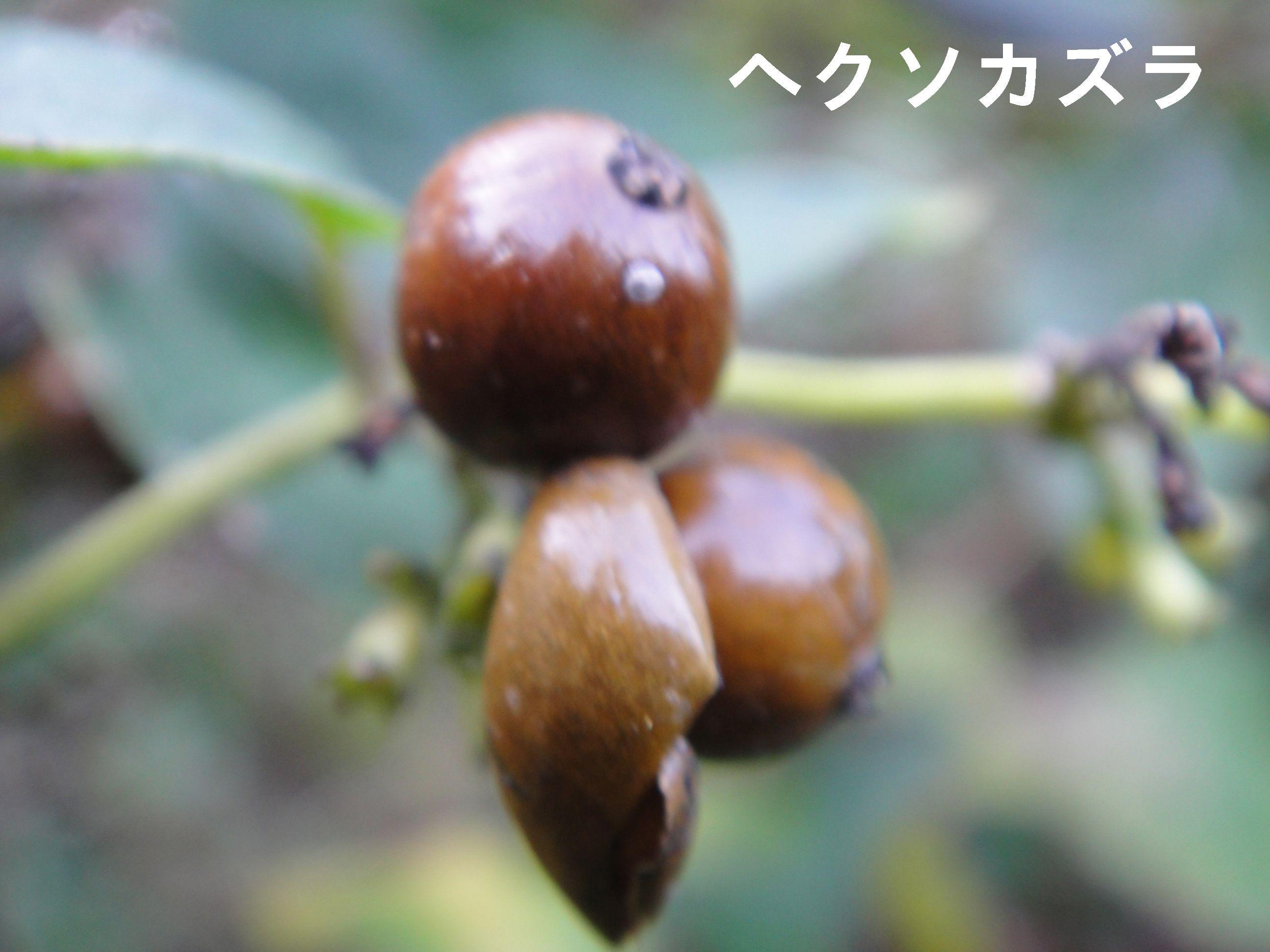 H23年11月度植物調査_c0108460_1656954.jpg