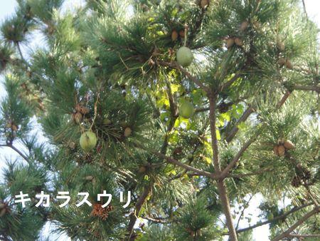 H23年11月度植物調査_c0108460_16574067.jpg
