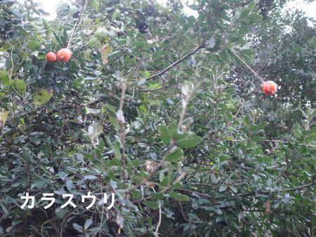 H23年11月度植物調査_c0108460_17192486.jpg