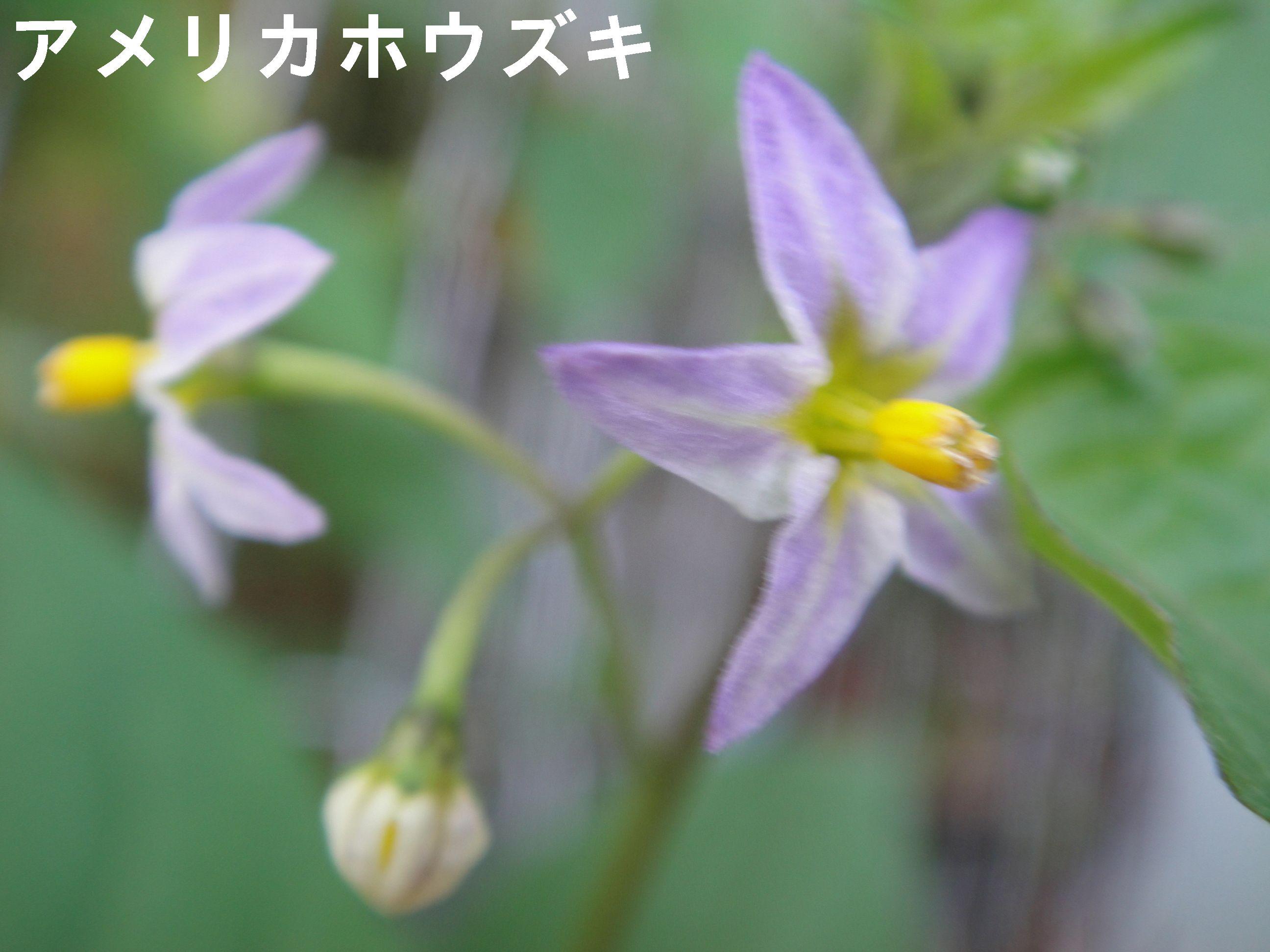 H23年11月度植物調査_c0108460_1724476.jpg