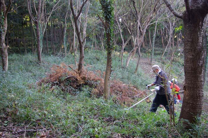 六国見山伐採ヒノキ後始末④紅葉とエゴノキの植樹準備OK_c0014967_8521819.jpg