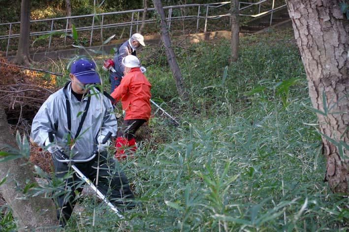 六国見山伐採ヒノキ後始末④紅葉とエゴノキの植樹準備OK_c0014967_8524328.jpg