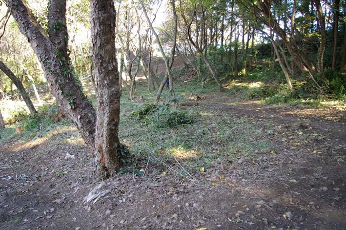 六国見山伐採ヒノキ後始末④紅葉とエゴノキの植樹準備OK_c0014967_85244.jpg