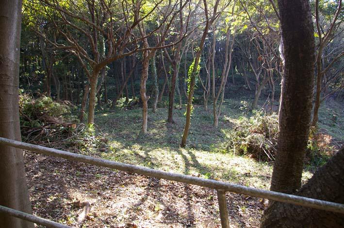 六国見山伐採ヒノキ後始末④紅葉とエゴノキの植樹準備OK_c0014967_853512.jpg