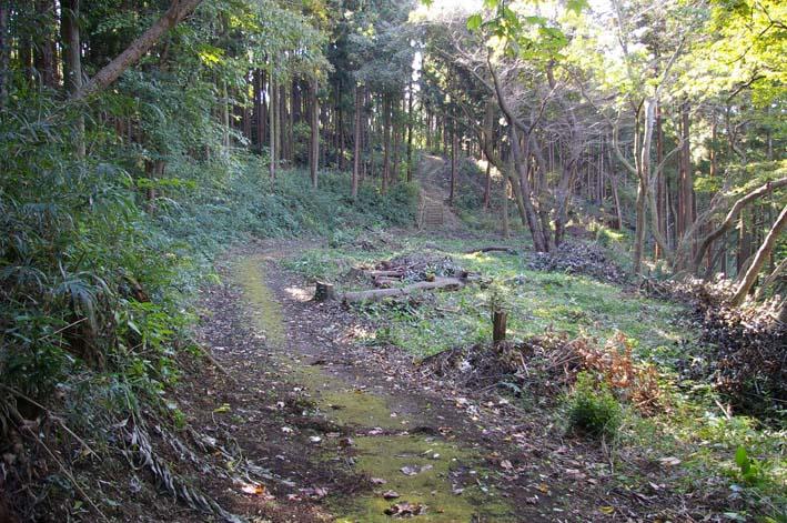 六国見山伐採ヒノキ後始末④紅葉とエゴノキの植樹準備OK_c0014967_9181960.jpg