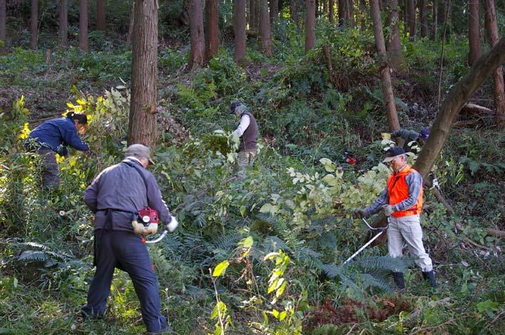 六国見山伐採ヒノキ後始末④紅葉とエゴノキの植樹準備OK_c0014967_9272432.jpg