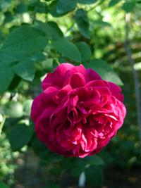 『花遊庭』さん_b0142989_19304043.jpg