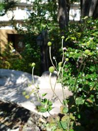 『花遊庭』さん_b0142989_19321196.jpg