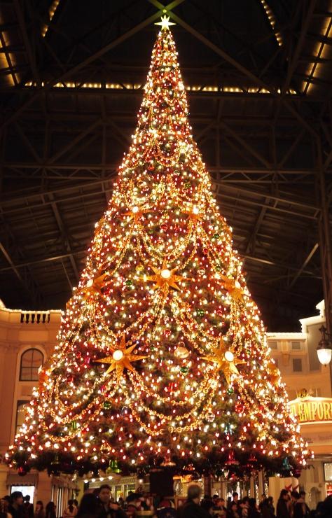 Tokyo Disneyland ~スターブライトクリスマス~_a0127090_20343277.jpg