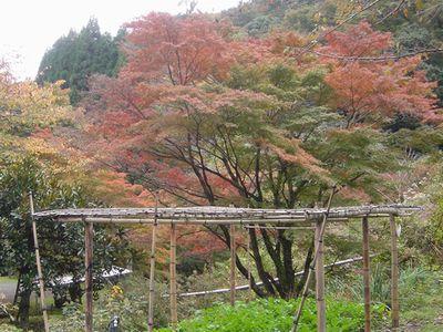 そろそろ紅葉が始まりました_e0152233_1546946.jpg