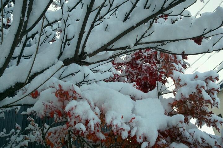 雪積もったり北海動画出たり_e0173533_155910.jpg
